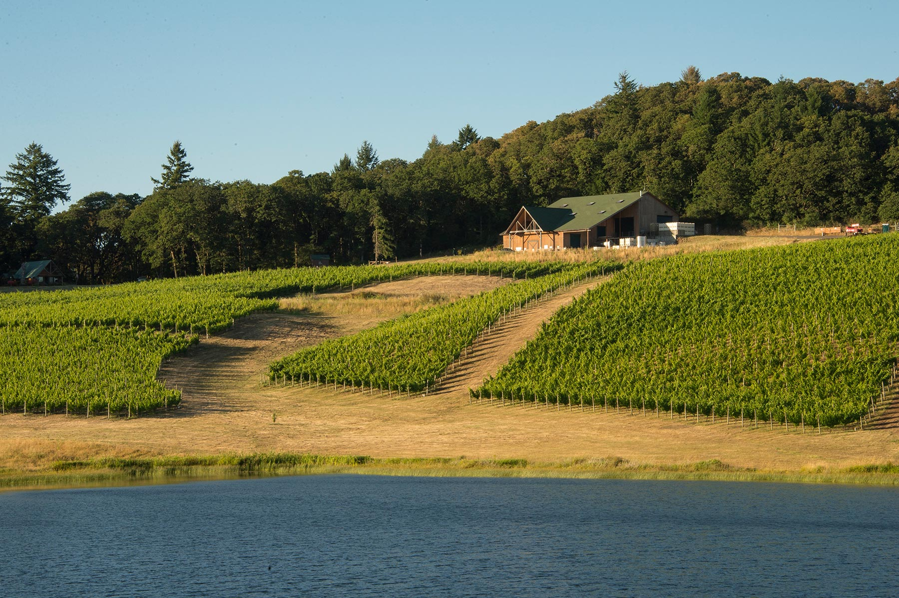 Best Oregon Vineyards Cherry Hill