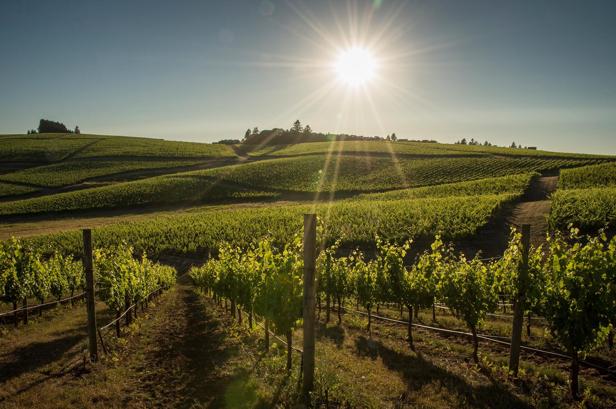 Best Oregon Vineyards Cherry Hill
