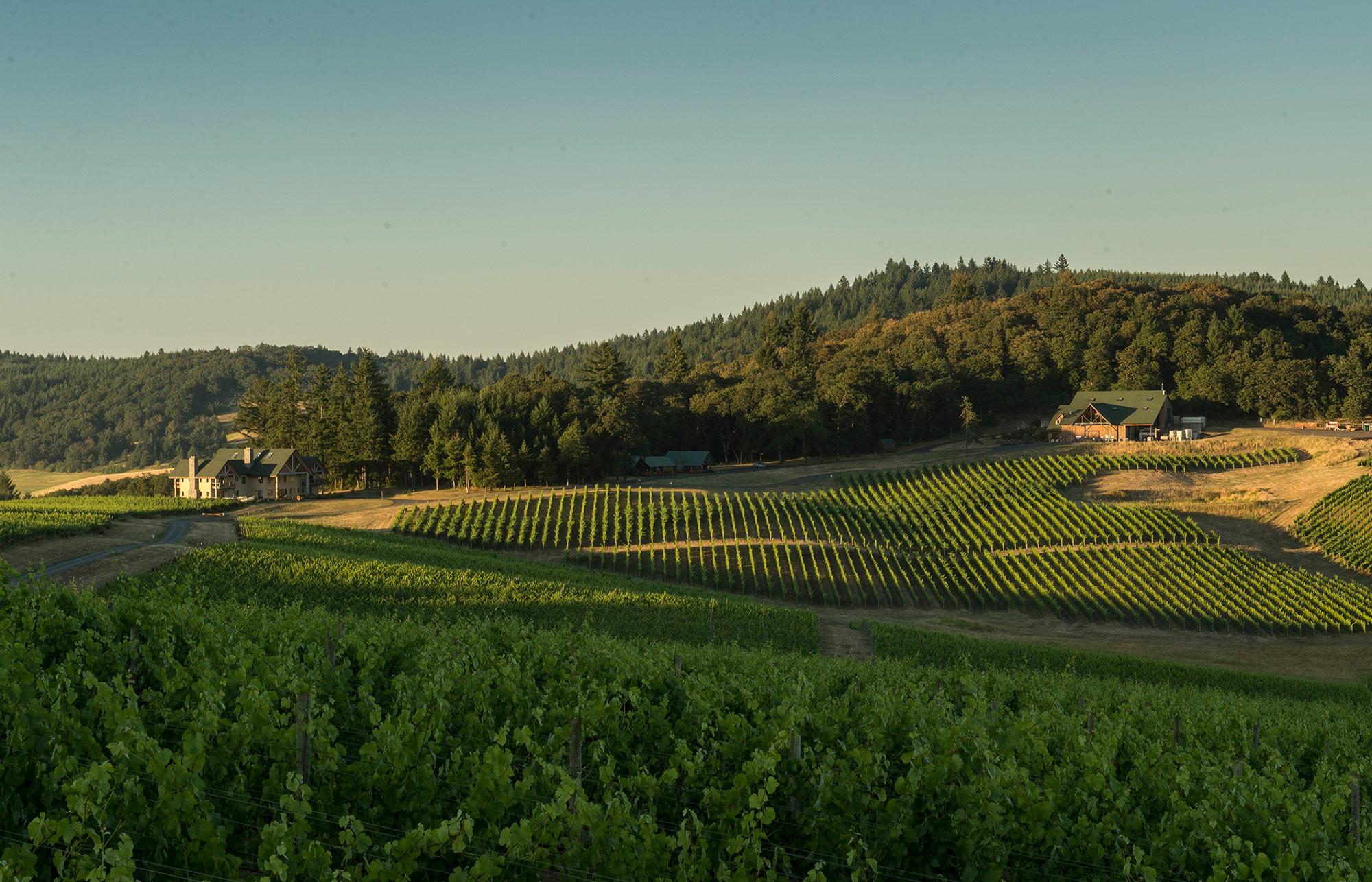 Most Beautiful Oregon Winery