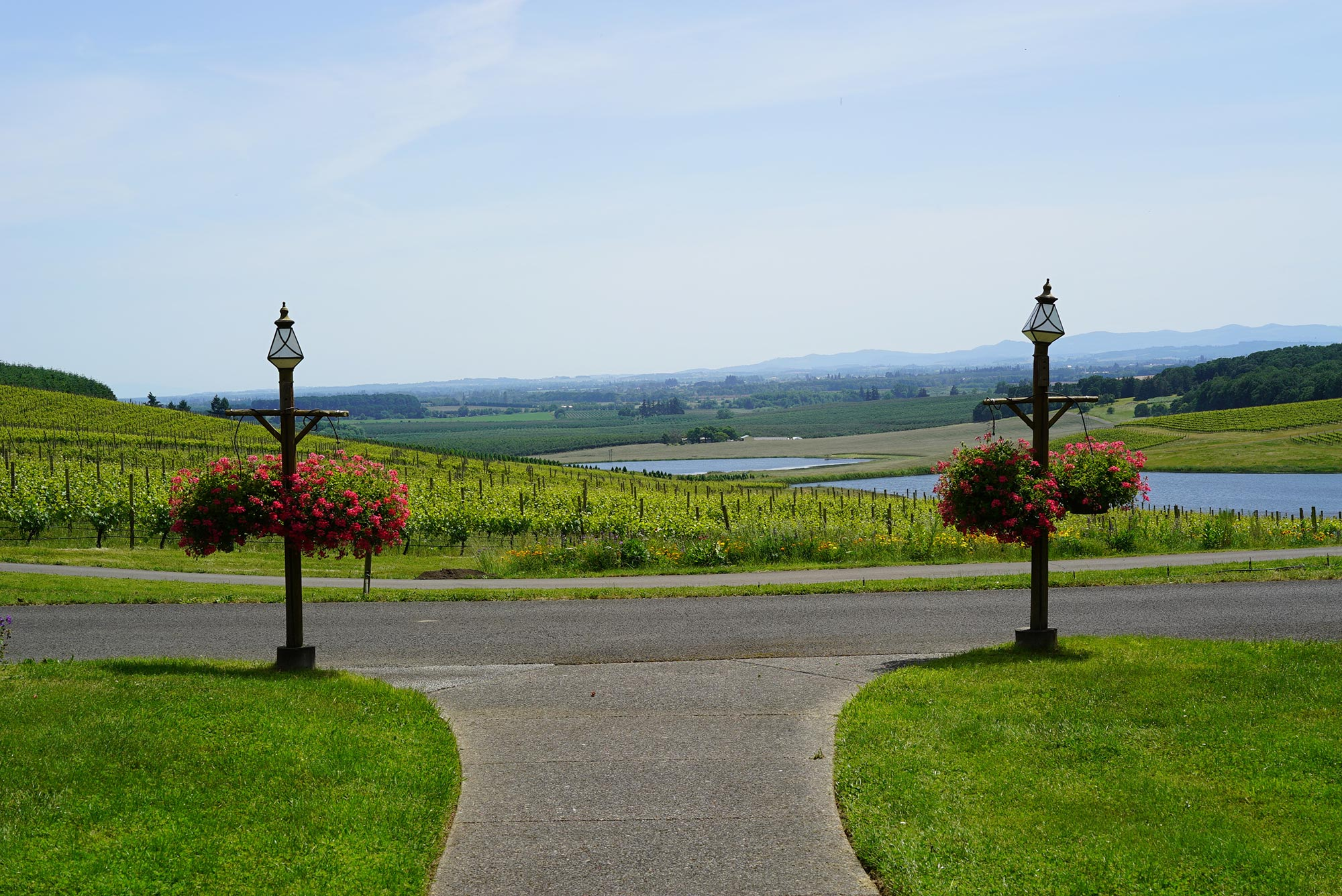Best Oregon Winery Views